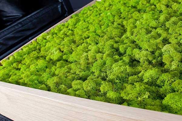 Ortie spécialiste en réalisation de table végétale en Vendée aux Sables d'olonne, pays des Olonnes, la Roche sur Yon